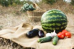 Herbsternte des Gemüses und der Früchte Begriffserntegraphik mit verschiedenem Gemüse auf dem Feld Lizenzfreie Stockbilder