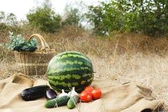 Herbsternte des Gemüses und der Früchte Begriffserntegraphik mit verschiedenem Gemüse auf dem Feld Stockbilder