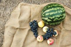 Herbsternte des Gemüses und der Früchte Begriffserntegraphik mit verschiedenem Gemüse auf dem Feld Stockfotos