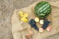 Herbsternte des Gemüses und der Früchte Begriffserntegraphik mit verschiedenem Gemüse auf dem Feld Lizenzfreies Stockfoto