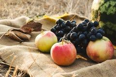 Herbsternte des Gemüses und der Früchte Begriffserntegraphik mit verschiedenem Gemüse auf dem Feld Stockfotografie