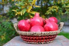 Herbsternte - Granatapfel Lizenzfreie Stockbilder