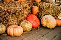 Herbsternte, Kürbise für Halloween Stockfoto