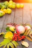 Herbsternte Nahaufnahme von bunten Blättern, Ebereschenbeeren, Äpfel mit Birnen auf einem Holztisch im Garten stockfoto