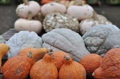 Herbsternte oder reife mehrfarbige Kürbise von verschiedenen Größen stockfoto