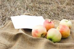 Herbsternte von Äpfeln Begriffserntegraphik mit verschiedenem Gemüse auf dem Feld Stockbilder