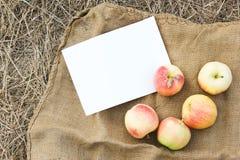 Herbsternte von Äpfeln Begriffserntegraphik mit verschiedenem Gemüse auf dem Feld Lizenzfreie Stockfotografie