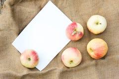 Herbsternte von Äpfeln Begriffserntegraphik mit verschiedenem Gemüse auf dem Feld Lizenzfreie Stockbilder