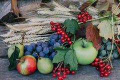 Herbsterntefrüchte Stockfotos