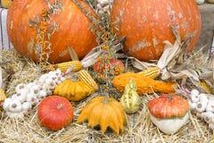 Herbsternten Stockfoto