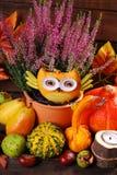 Herbsterntestillleben Lizenzfreie Stockfotos