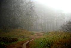 Herbstes forrest Stockfotos