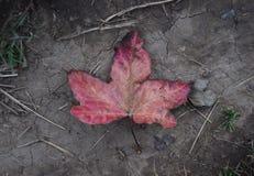 Herbstes um, der wieder kommt Lizenzfreie Stockfotos