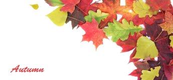 Herbstfahne Lizenzfreies Stockfoto