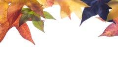 Herbstfall Blätter Stockfoto