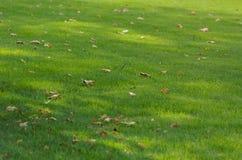Herbstfall der Blätter Stockbild