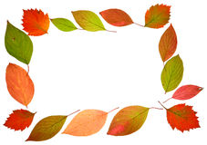 Herbstfall lässt Feld stockbild