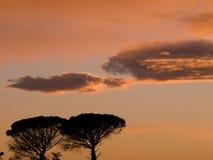 Herbstfall-Szenenhimmel und Baumschattenbild Stockfoto