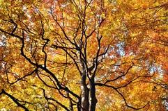 Herbstfallbäume stockbild