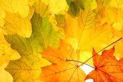 Herbstfallblätter lizenzfreies stockfoto