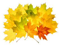 Herbstfallblätter lizenzfreie stockfotografie