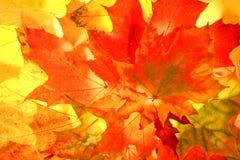 Herbstfallblätter stockfoto