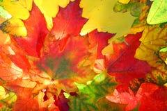 Herbstfallblätter Lizenzfreies Stockbild