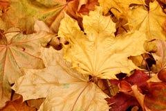 Herbstfallblätter lizenzfreie stockfotos