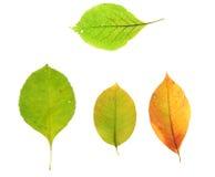 Herbstfallblätter Stockbilder