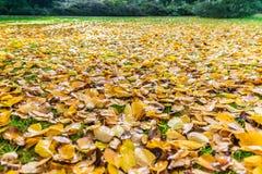 Herbstfallblätter auf Gras Stockbild