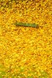 Herbstfalllandschaft Bank und Blätter im Stadtpark Stockbild