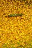 Herbstfalllandschaft Bank und Blätter im Stadtpark Stockfotografie