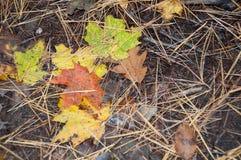 Herbstfarbblätter auf dem Boden Lizenzfreies Stockbild