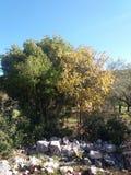 Herbstfarbblatt stockfoto