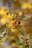 Herbstfarbe Lizenzfreie Stockfotografie
