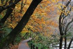 Herbstfarbe Lizenzfreies Stockbild