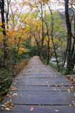 Herbstfarbe Stockfotos