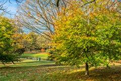 Herbstfarbe in Grove-Park, Harborne, Birmingham Stockfotografie