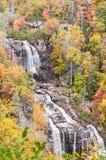 Herbstfarbe im Wald des North Carolina stockfotos
