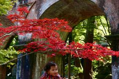 Herbstfarbe in Kyoto Stockfoto