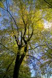 Herbstfarbe lickey Hügel England Stockbild
