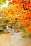 Herbstfarbe von Ahornblättern über kleinem Kanal in Japan Lizenzfreie Stockbilder
