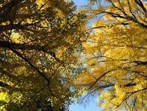 Herbstfarbe von Blättern in Japnese-Garten Stockbilder