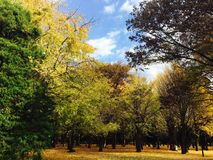 Herbstfarbe von Blättern in Japnese-Park Lizenzfreie Stockfotos