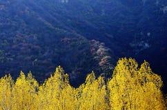 Herbstfarbe von Qinling Lizenzfreies Stockbild