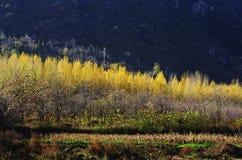 Herbstfarbe von Qinling Stockbild