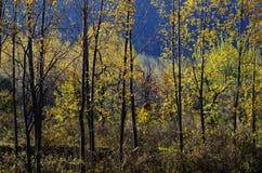 Herbstfarbe von Qinling Lizenzfreies Stockfoto