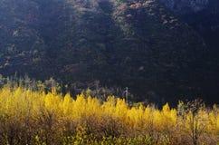 Herbstfarbe von Qinling Stockfotos