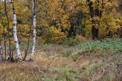 Herbstfarben Lizenzfreies Stockfoto