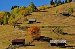 Herbstfarben Stockfotografie